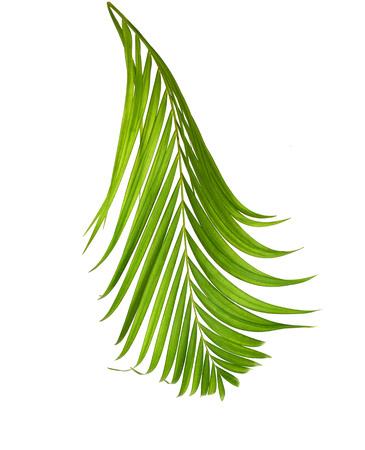 interleaved: green palm leaf more in my portfolio Stock Photo