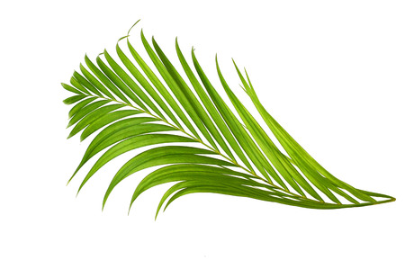 interleaved: Palm leaves isolated on white background.