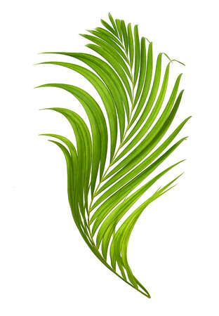 Palm leaves isolated on white beautiful
