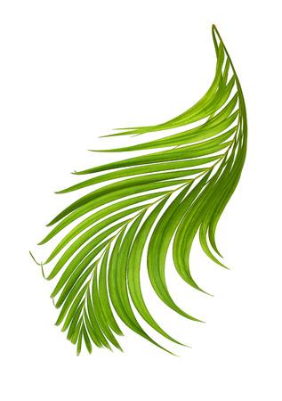 interleaved: Palm leaf isolated on background .. Stock Photo