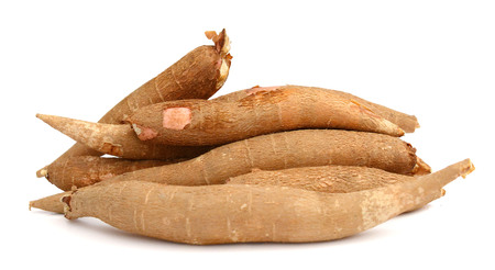 scabrous: Cassava live on a white background Stock Photo