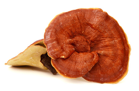 Lingzhi mushroom, Reishi mushroom isolate on white background
