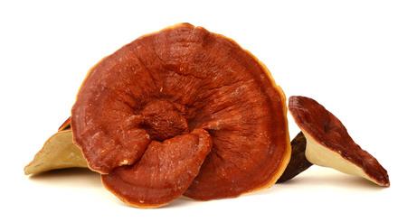 Lingzhi mushroom, Reishi mushroom isolate on white background