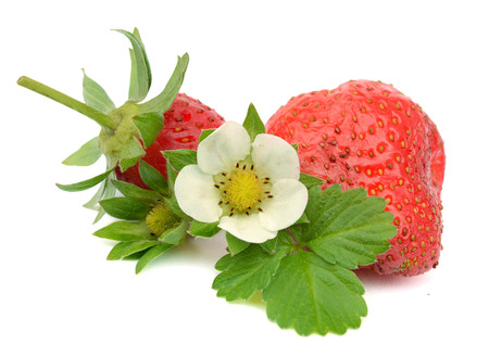 ripe organic strawberries with leaf on white