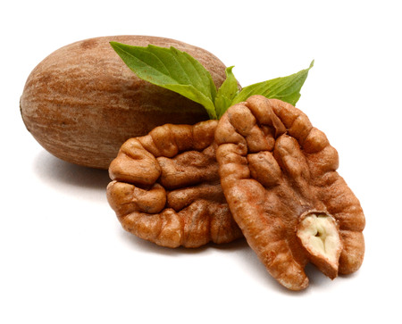 Pecan nuts close up on white background