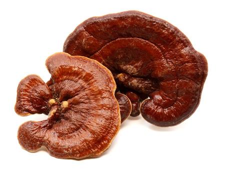 Ganoderma Lucidum Mushroom or Ling Zhi Mushroom on wood background Stock Photo