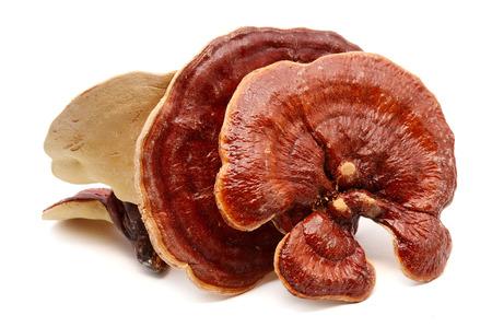 Ganoderma Lucidum Pilz oder Ling Zhi Pilze lokalisiert auf weißem Hintergrund