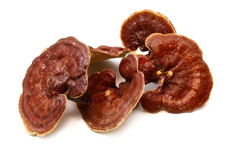 ganoderma lucidum seta o ling zhi setas shimeji en el fondo blanco