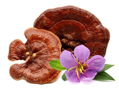 Brown mushroom closeup with black background Stock Photo