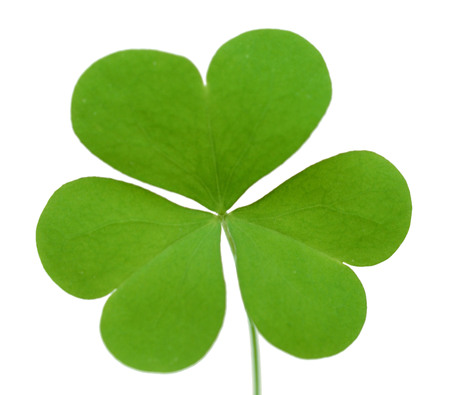 Green four-leaf clover isolated on white background.