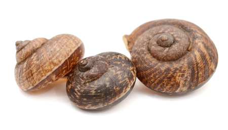 Close up view of five Escargots houses isolated on white background - Image Stock Photo