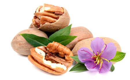 Two pecans with leaves isolated on white background Imagens