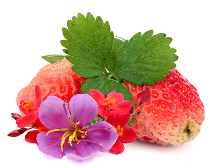 Strawberries macro with leaves isolated on white Standard-Bild - 118102145
