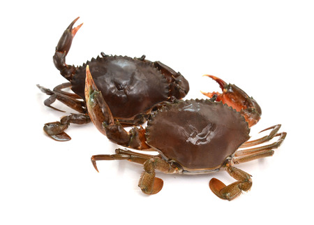 black crab on white background