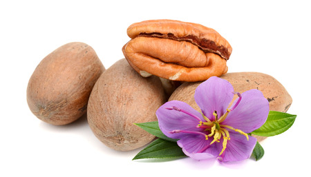 Pecan nut set isolated on white background as package design element Фото со стока