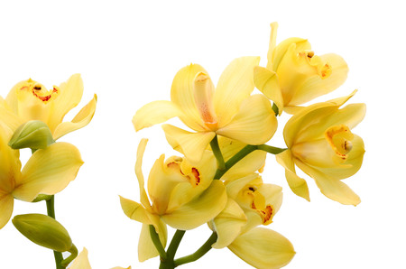 Very rare purple orchid isolated on white background. Closeup. Banque d'images - 118986865