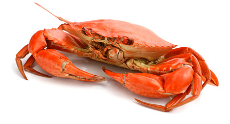 Cooked crab. File contains clipping paths. Reklamní fotografie