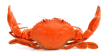 steamed crab isolated on white background Banco de Imagens