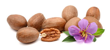 Pecan nuts with leaves