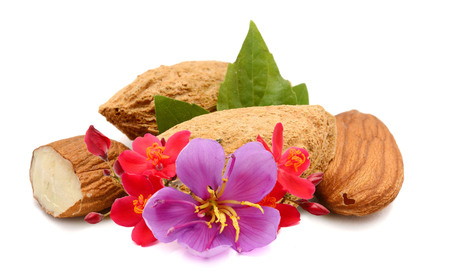 Almonds nuts isolated on white Archivio Fotografico - 119796535