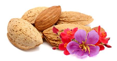 Almonds nuts isolated on white Archivio Fotografico - 119796538