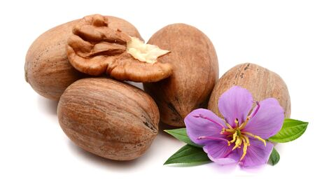 Single pecan nut isolated