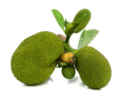 - Jackfruit isolated on white background