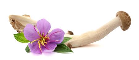 Photo - Fresh champignon mushrooms isolated on white Фото со стока
