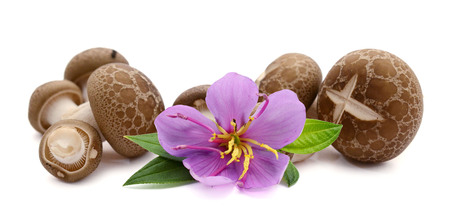 shimeji mushrooms brown varieties isolated on white background