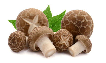 shimeji mushrooms brown varieties isolated on white background