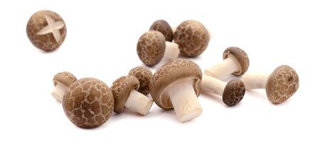 shiitake mushroom isolated