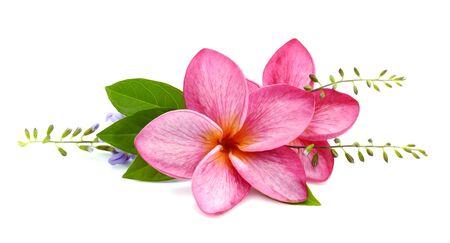 Two frangipani flowers 写真素材