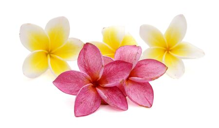 frangipani flower isolated on white Stok Fotoğraf