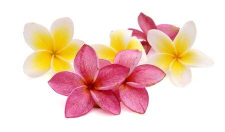 close up of beauty frangipani Reklamní fotografie