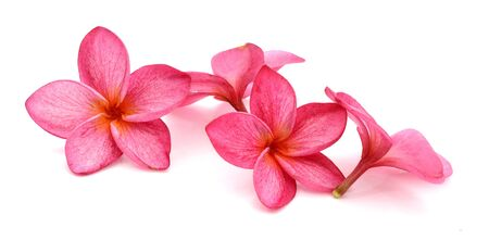 Frangipani flower isolated on white