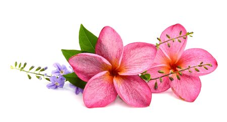 frangipani (plumeria) flower isolated on white background
