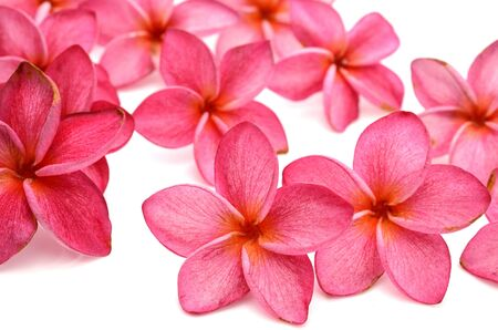 The Red frangipani Colors on a white background