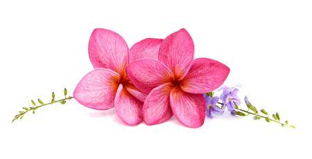 Beautiful Frangipani flowers - border design 免版税图像
