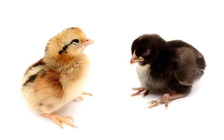 Cute little chicken and egg shell isolated on white background Reklamní fotografie