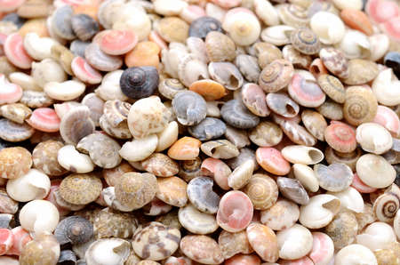 The Seashells.