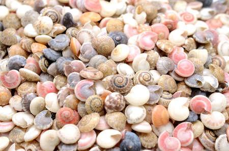 Seashells pile.