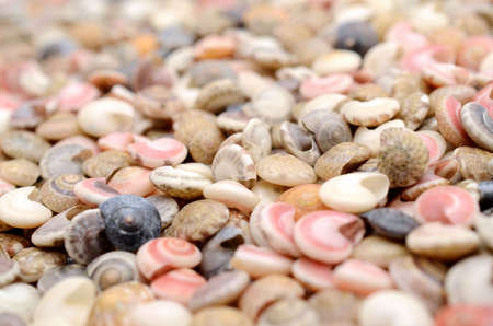Colorful seashells.