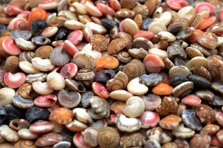 seashells pile. 免版税图像