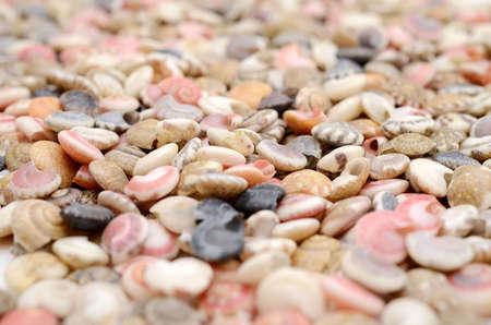 Seashells. 免版税图像