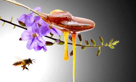 Honey in golden spoon Honey in golden spoon Honey in golden sp