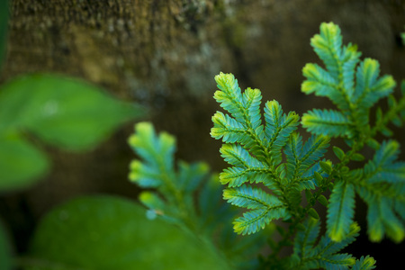 Blue fern close up found only in abundant forests. Natural beauty is rare. Stock Photo