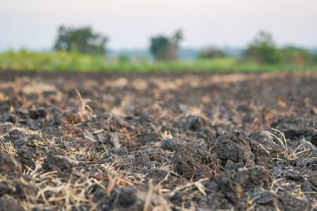 Soil prepared by farmers for crop cultivation.