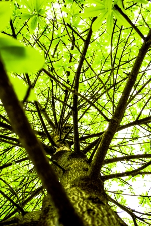 trailway: Green treetop Branch Branches, leaves  Stock Photo