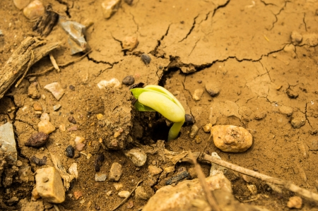 Ecology concept  Rising sprout on dry ground  photo