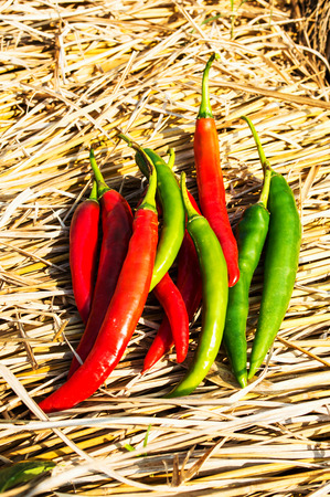 intense flavor: peppers on the hay